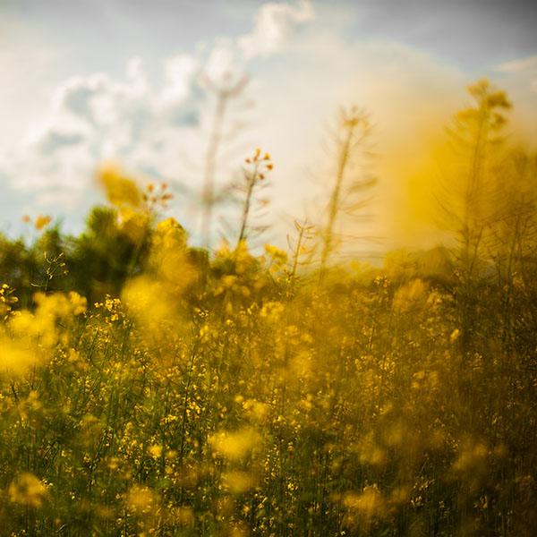 iPapers.co-Apple-iPhone-iPad-Macbook-iMac-wallpaper-mw20-nature-yellow-flower-bokeh-spring-happy-wallpaper
