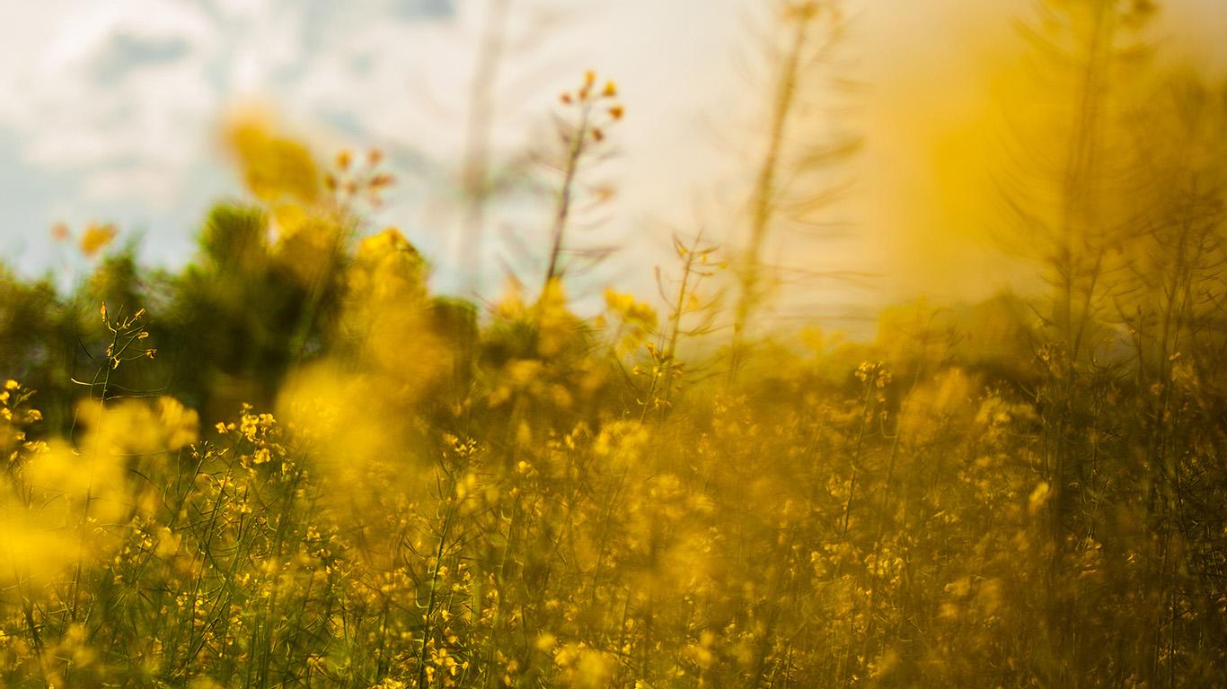 desktop-wallpaper-laptop-mac-macbook-airmw20-nature-yellow-flower-bokeh-spring-happy-wallpaper