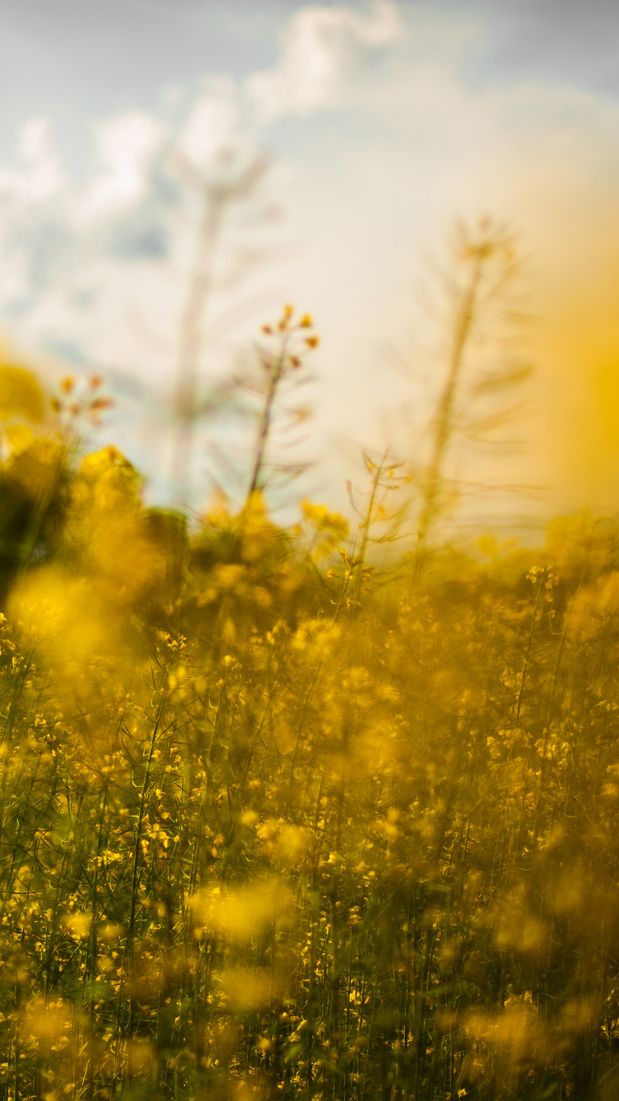 Iphone7papers Mw20 Nature Yellow Flower Bokeh Spring Happy