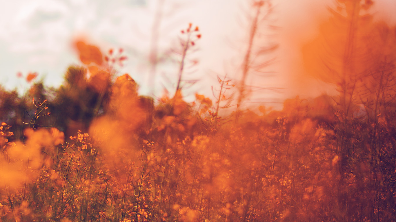 desktop-wallpaper-laptop-mac-macbook-air-mw21-nature-orange-flower-bokeh-spring-happy-wallpaper