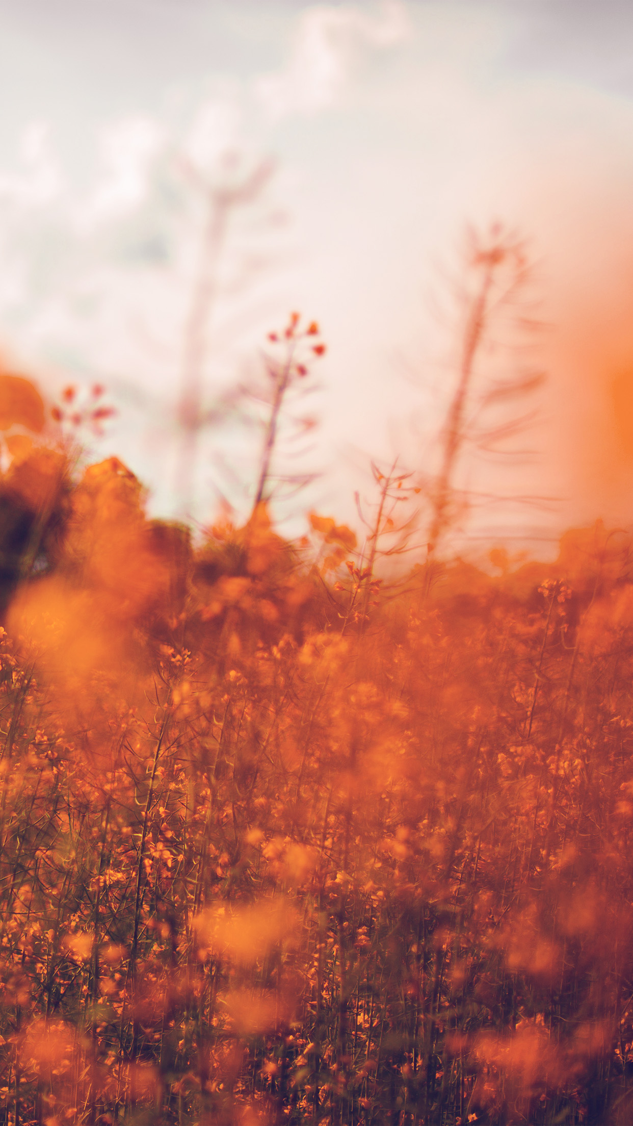 papers.co mw21 nature orange flower bokeh spring happy 34 iphone6 plus wallpaper