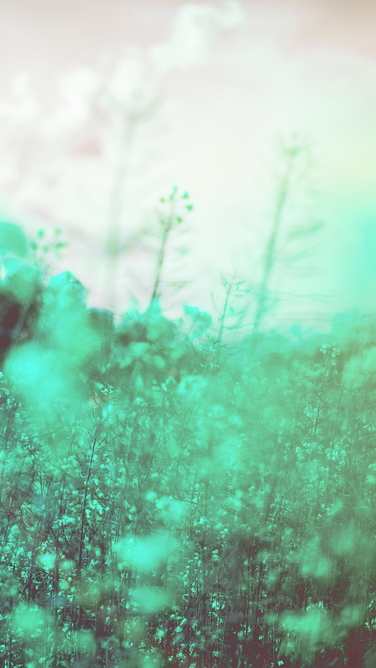 iPhone6papers.co-Apple-iPhone-6-iphone6-plus-wallpaper-mw22-nature-green-flower-bokeh-spring-happy-flare