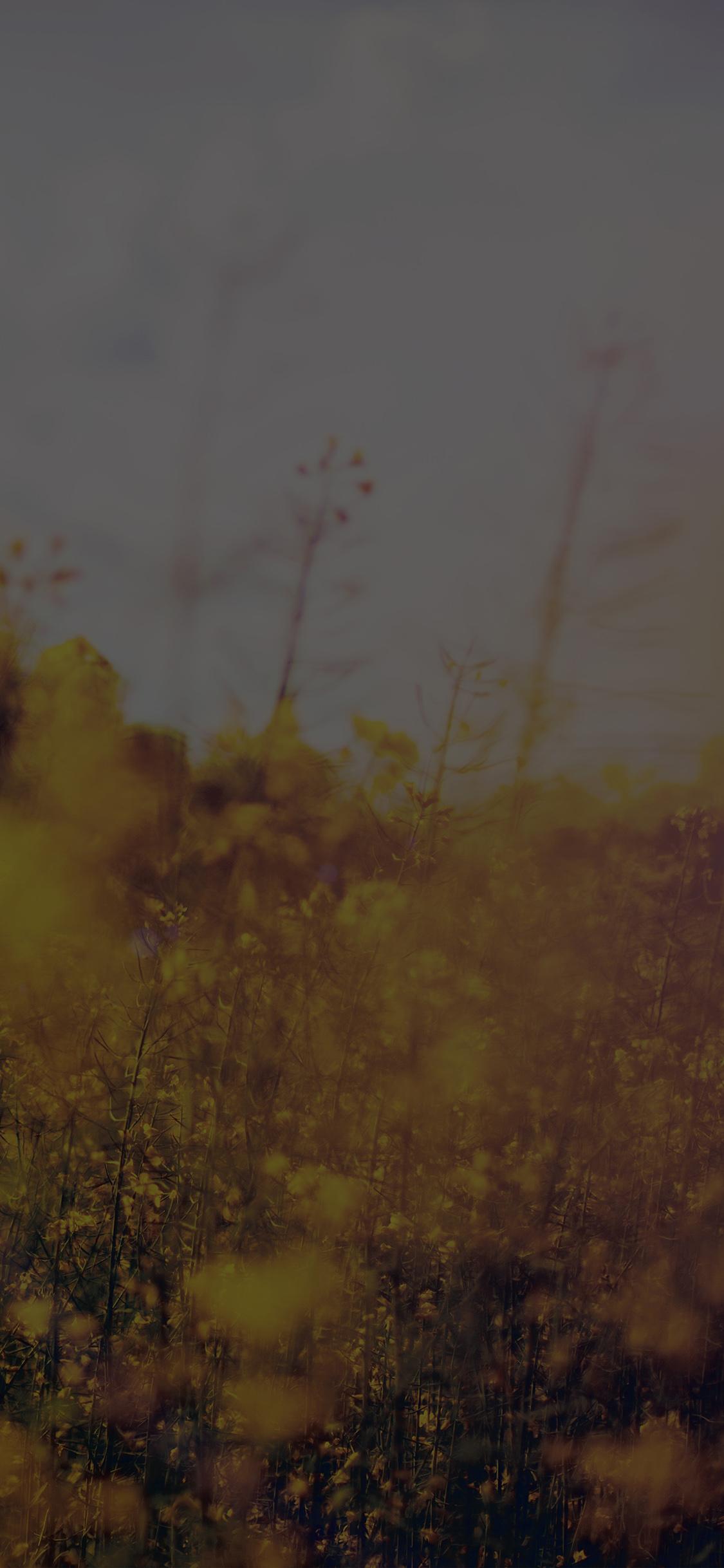iPhoneXpapers.com-Apple-iPhone-wallpaper-mw24-nature-green-flower-bokeh-spring-dark-happy-flare