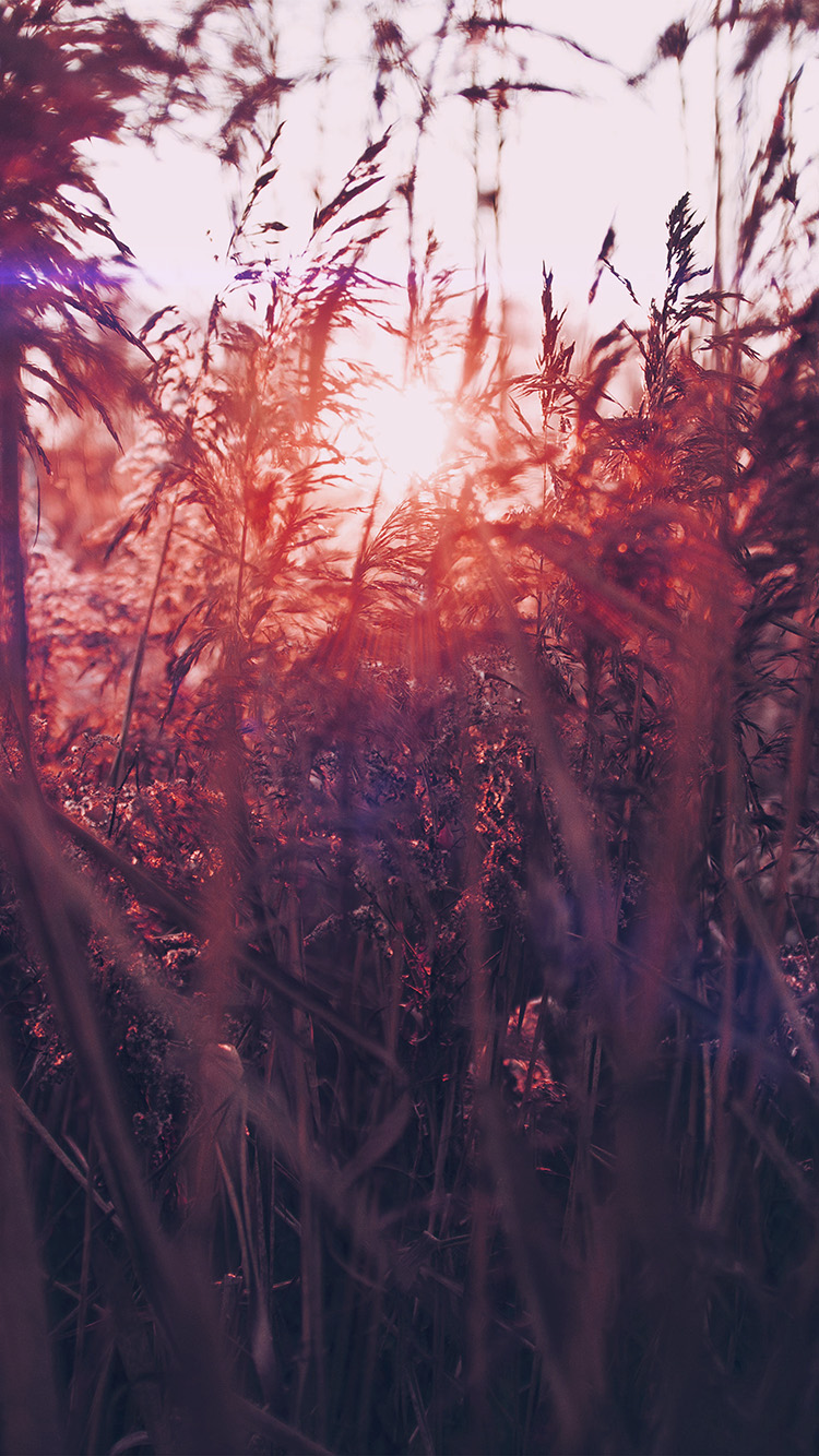 iPhonepapers.com-Apple-iPhone-wallpaper-mw26-sunset-nature-flower-fall-mountain-field-red-flare