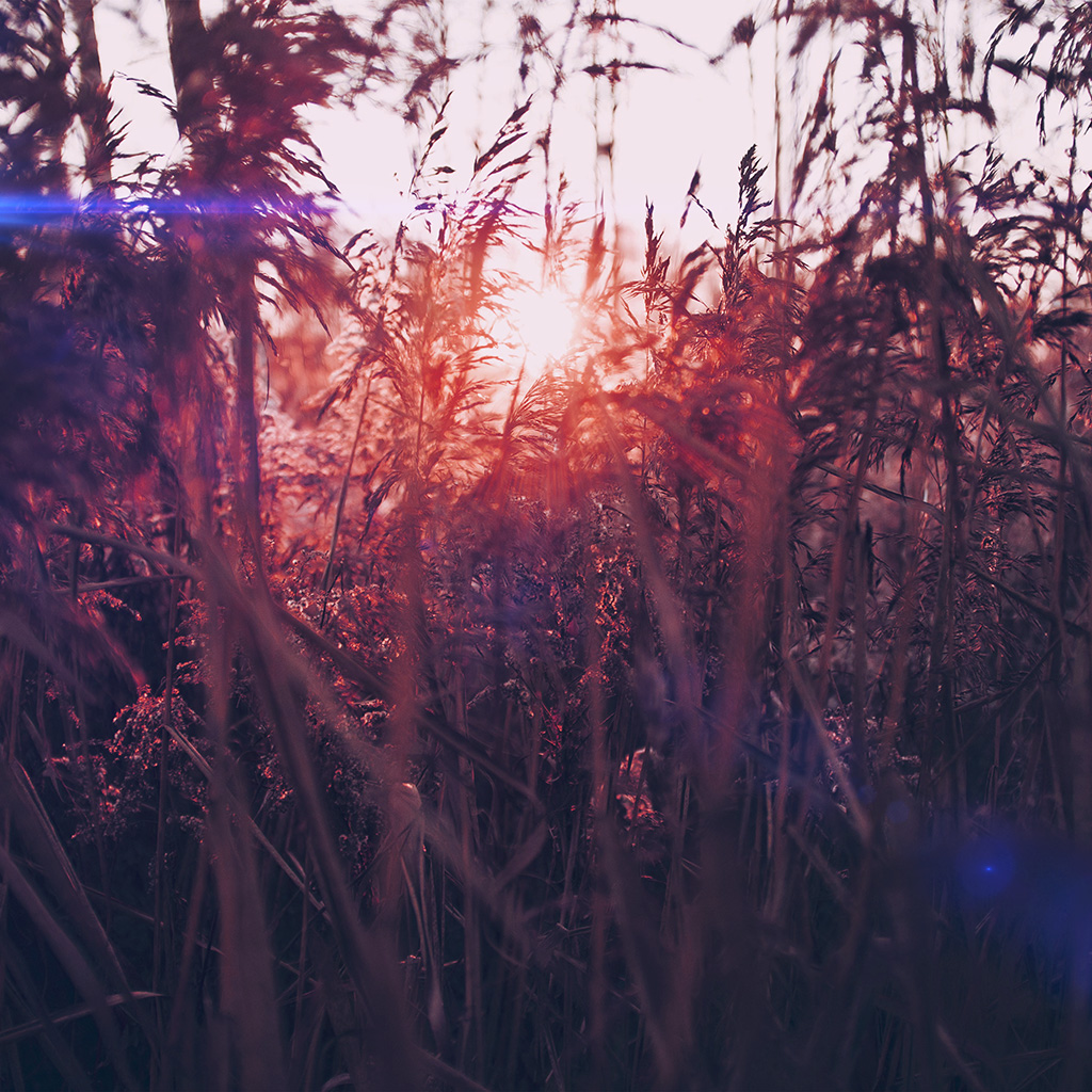wallpaper-mw26-sunset-nature-flower-fall-mountain-field-red-flare-wallpaper