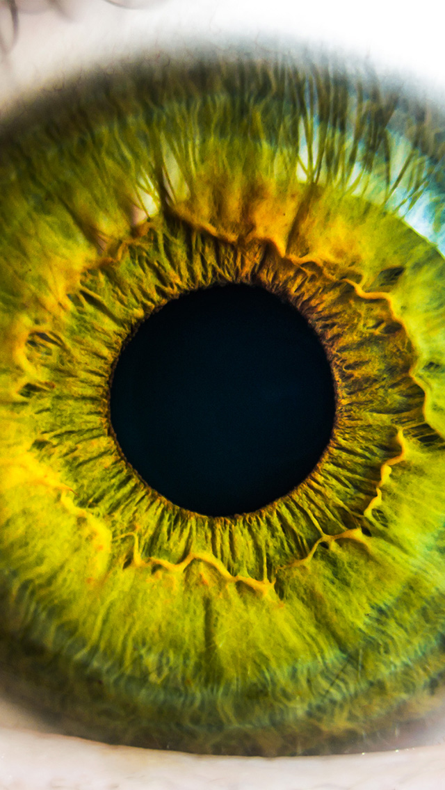 creation of the human eye essay The orbit is the bony cavity that contains the eyeball, muscles, nerves, and blood  vessels  each orbit is a pear-shaped structure that is formed by several bones.