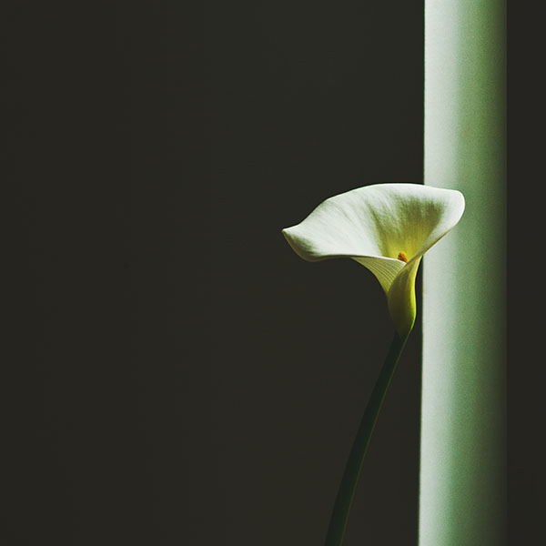iPapers.co-Apple-iPhone-iPad-Macbook-iMac-wallpaper-mw34-lily-flower-minimal-simple-green-nature-wallpaper