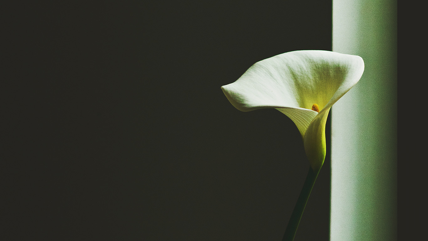 desktop-wallpaper-laptop-mac-macbook-airmw34-lily-flower-minimal-simple-green-nature-wallpaper
