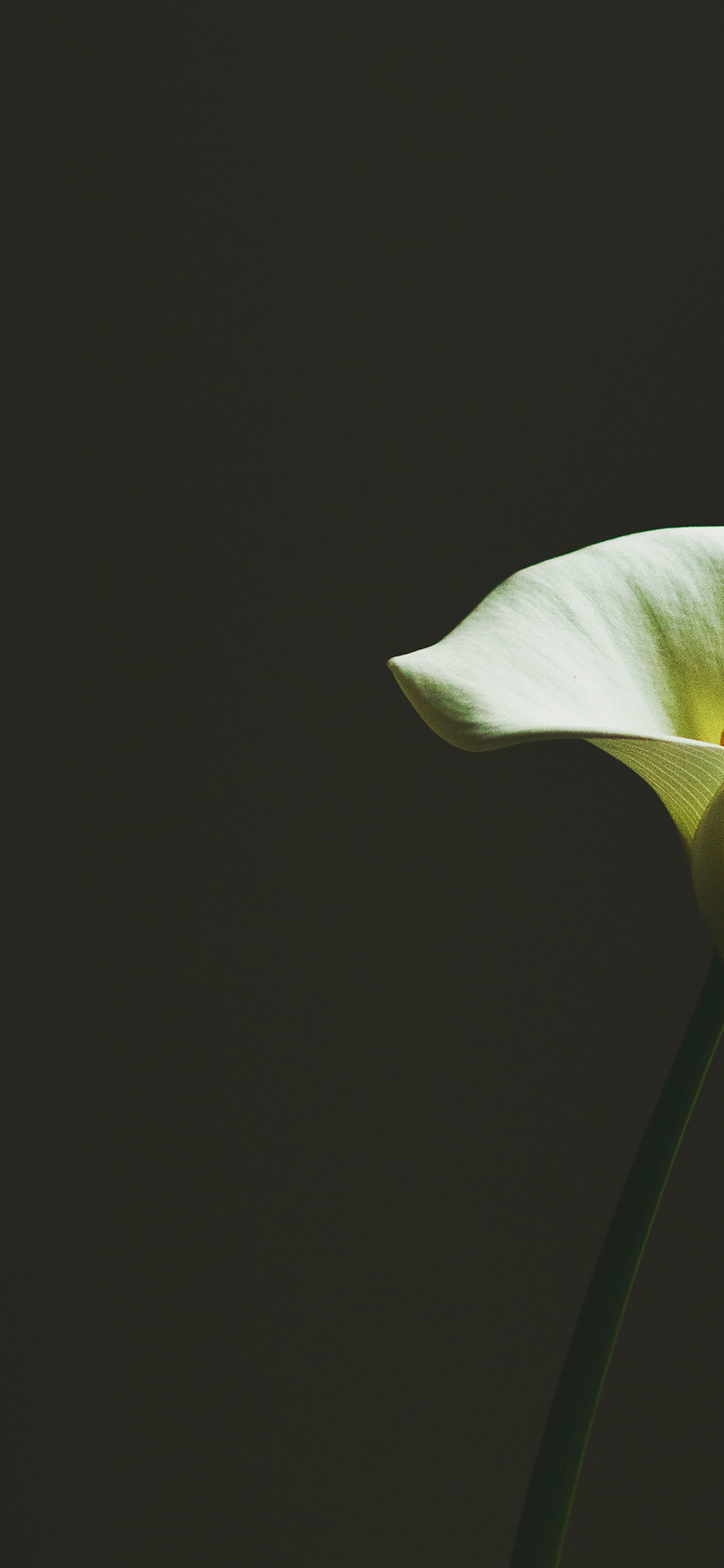 iPhoneXpapers.com-Apple-iPhone-wallpaper-mw34-lily-flower-minimal-simple-green-nature