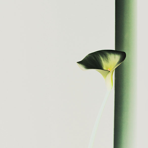 iPapers.co-Apple-iPhone-iPad-Macbook-iMac-wallpaper-mw35-lily-flower-minimal-simple-green-nature-inverted-wallpaper