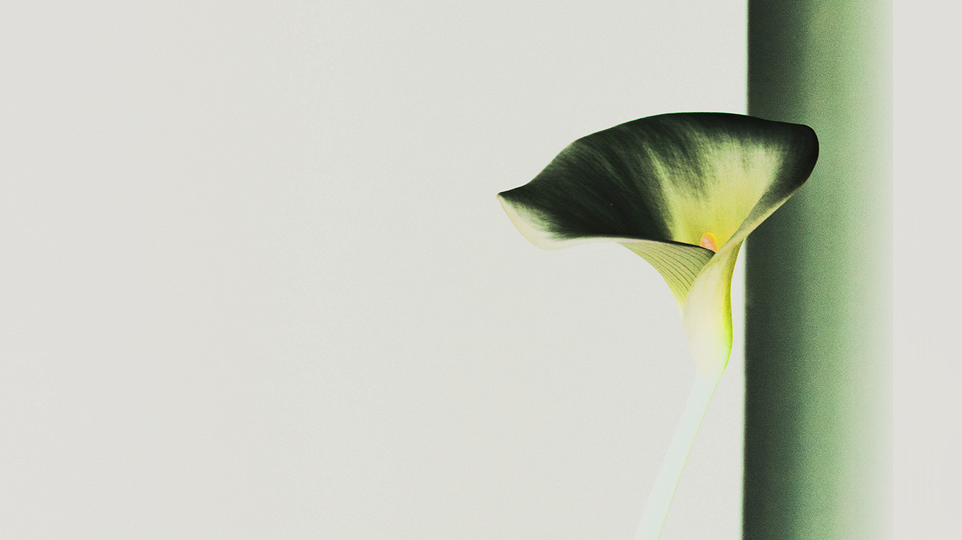 desktop-wallpaper-laptop-mac-macbook-air-mw35-lily-flower-minimal-simple-green-nature-inverted-wallpaper