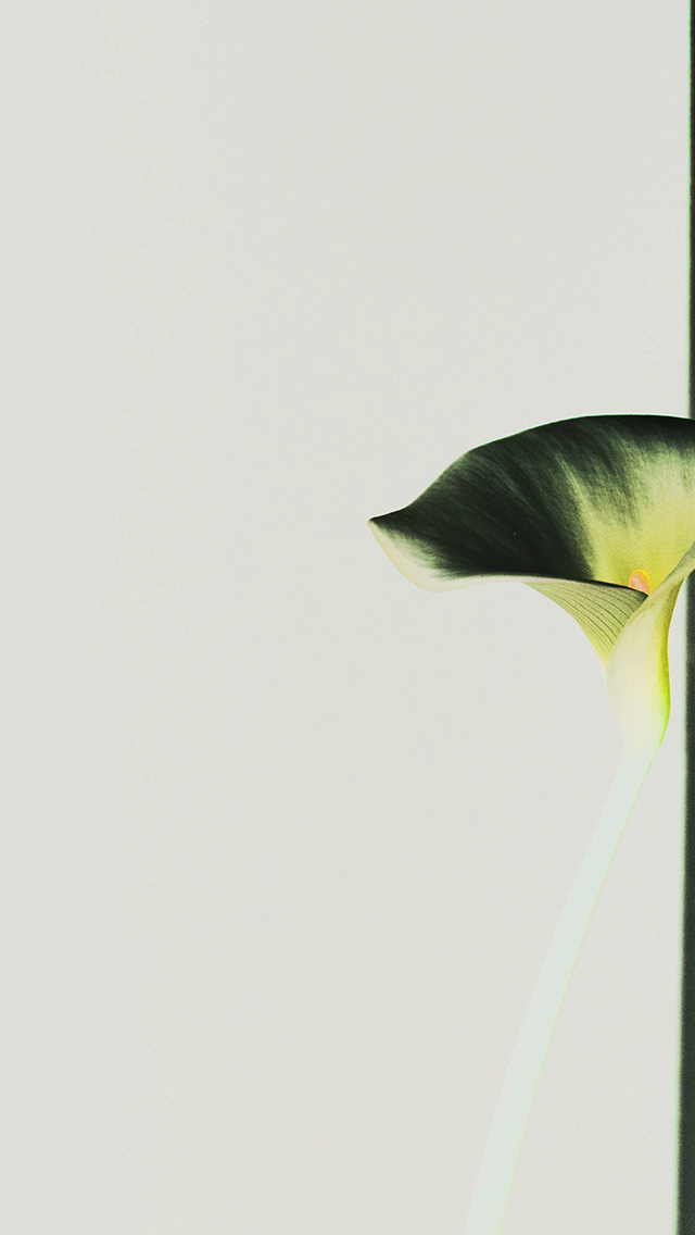 freeios8.com-iphone-4-5-6-plus-ipad-ios8-mw35-lily-flower-minimal-simple-green-nature-inverted