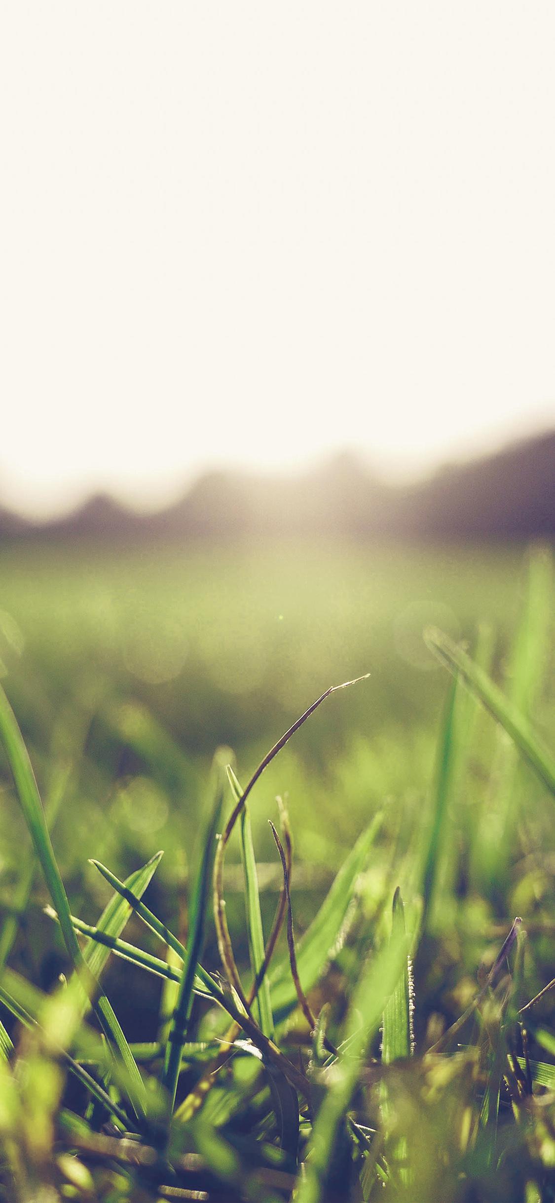 Iphone11papers Com Iphone11 Wallpaper Mw47 Grass Green Blue Bokeh Light Summer Nature