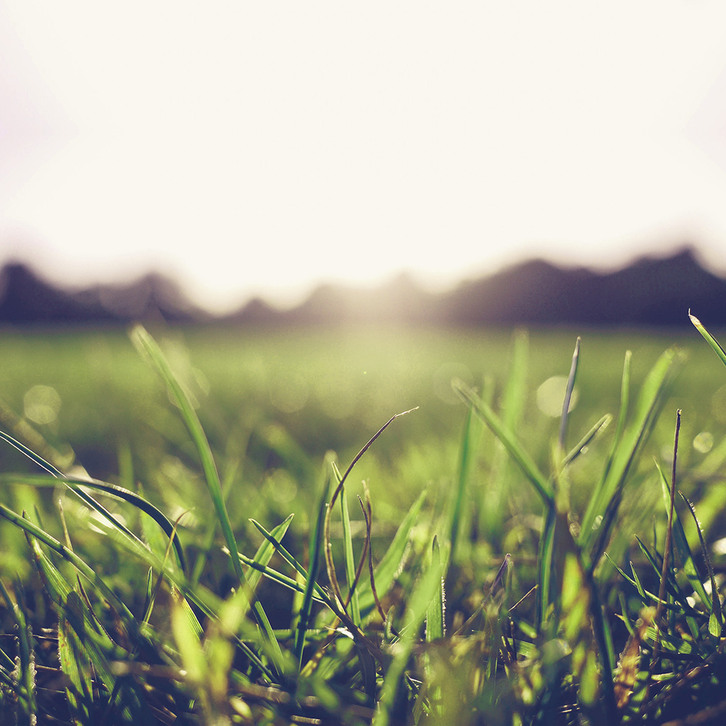 android-wallpaper-mw47-grass-green-blue-bokeh-light-summer-nature-wallpaper