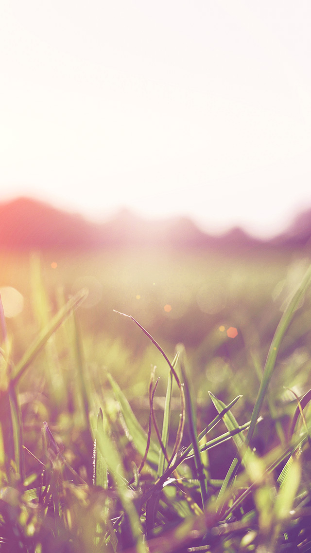 freeios8.com-iphone-4-5-6-plus-ipad-ios8-mw48-grass-green-orange-bokeh-light-summer-nature-flare