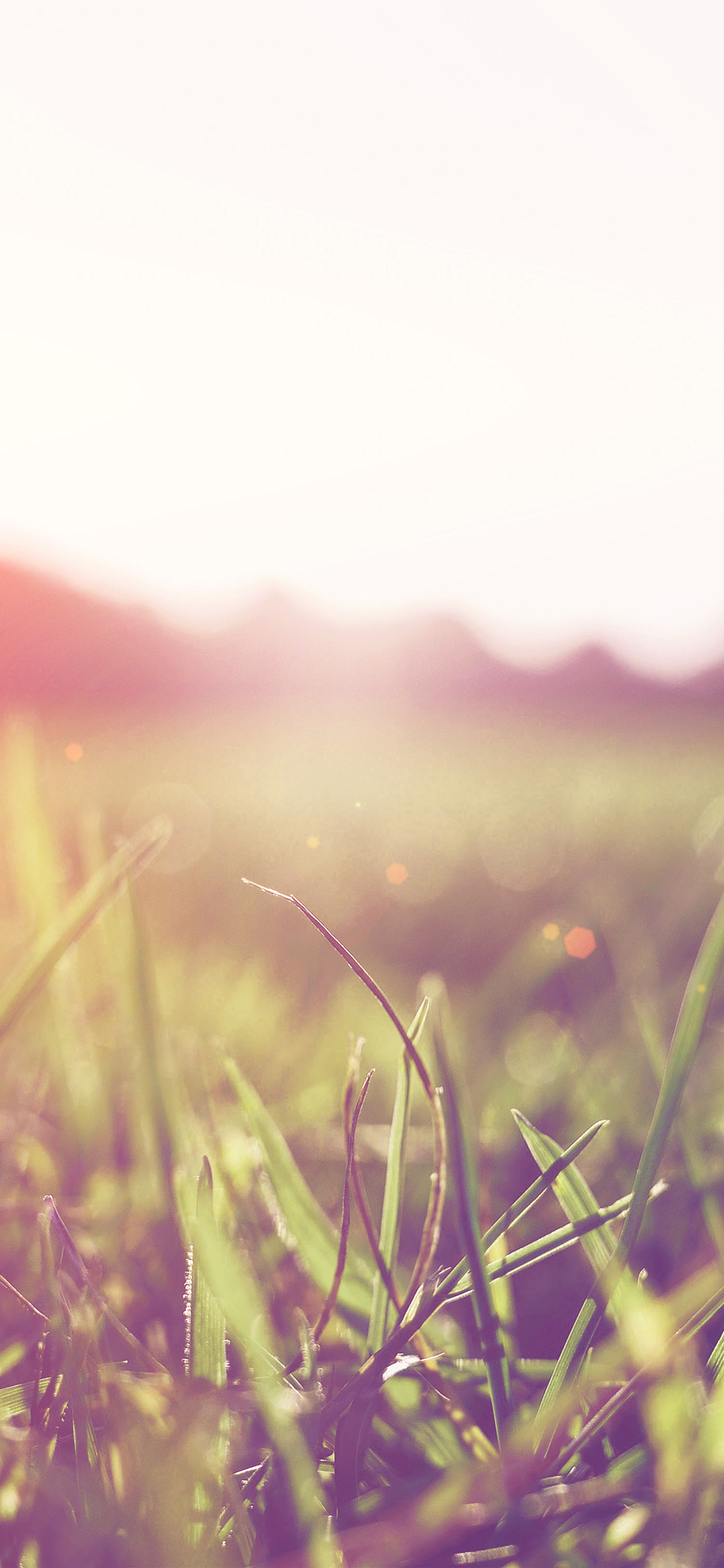 iPhonexpapers.com-Apple-iPhone-wallpaper-mw48-grass-green-orange-bokeh-light-summer-nature-flare
