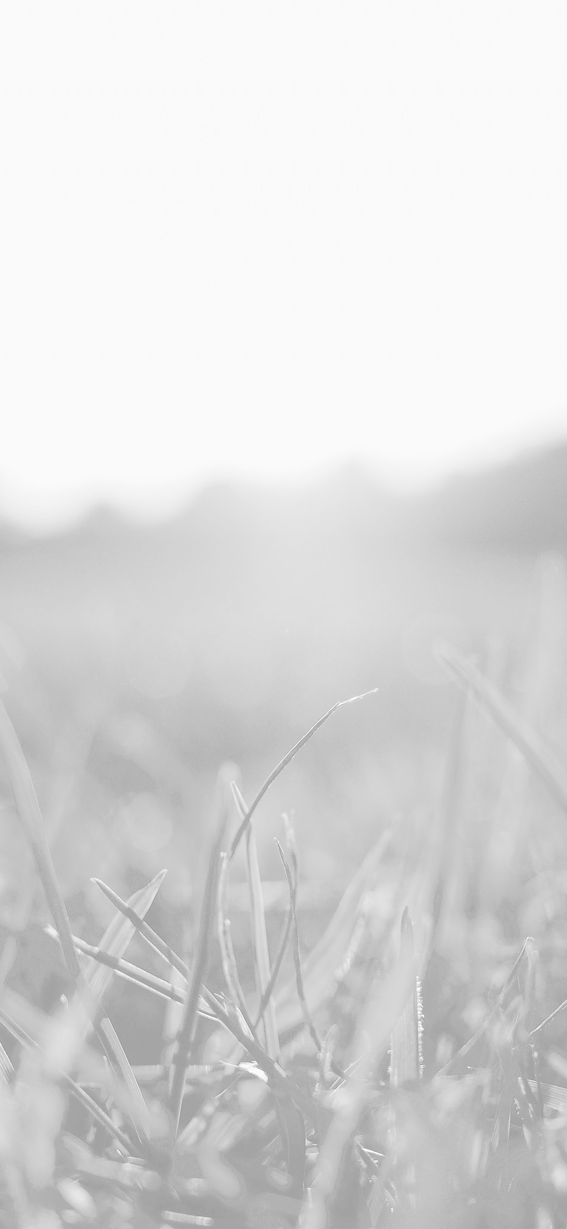 Mw49 Grass White Bokeh Light Summer Nature Wallpaper