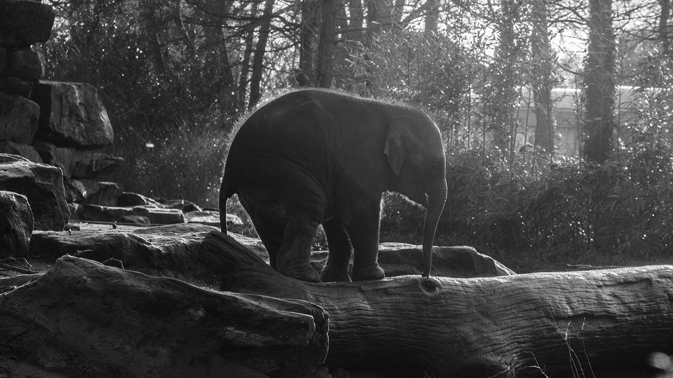 desktop-wallpaper-laptop-mac-macbook-airmw67-elephant-dark-bw-animal-cute-nature-baby-wallpaper