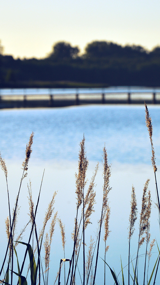 freeios8.com-iphone-4-5-6-plus-ipad-ios8-mw74-lake-view-flower-water-calm-nature-bokeh-blue