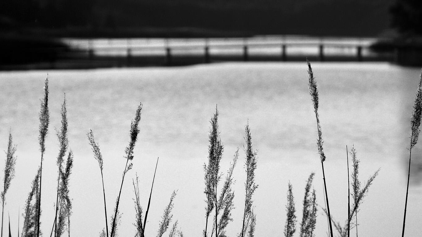 desktop-wallpaper-laptop-mac-macbook-air-mw75-lake-view-flower-water-calm-nature-bokeh-dark-bw-wallpaper