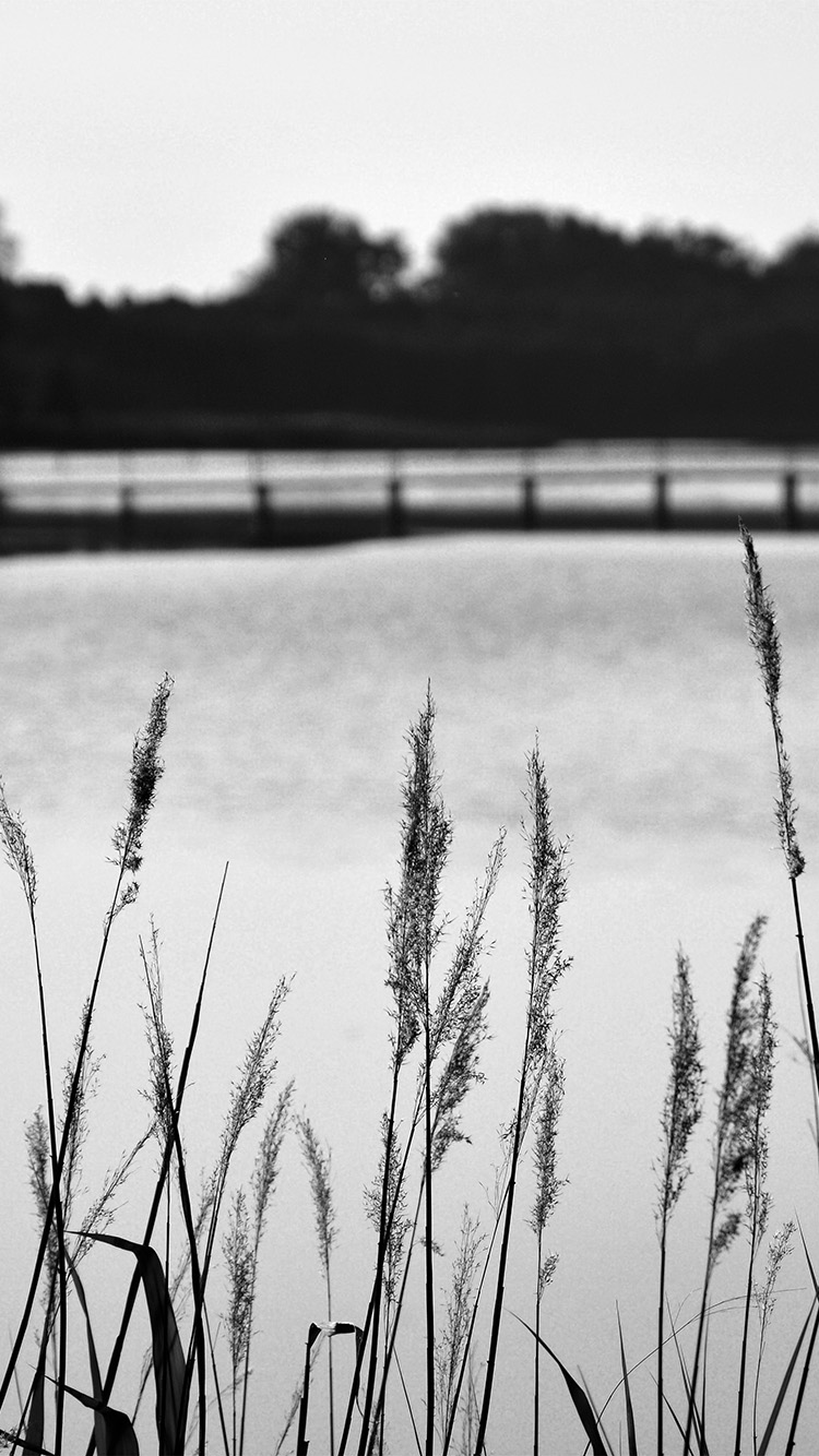 iPhone6papers.co-Apple-iPhone-6-iphone6-plus-wallpaper-mw75-lake-view-flower-water-calm-nature-bokeh-dark-bw