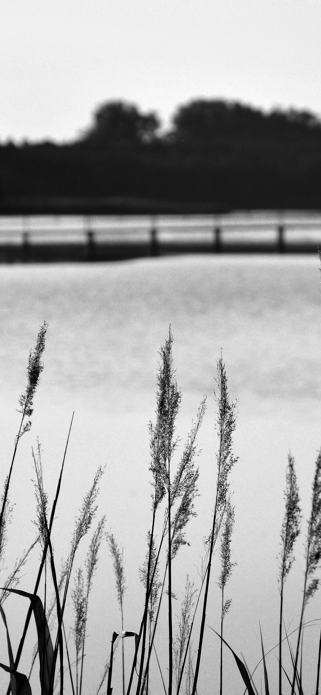 iPhoneXpapers.com-Apple-iPhone-wallpaper-mw75-lake-view-flower-water-calm-nature-bokeh-dark-bw