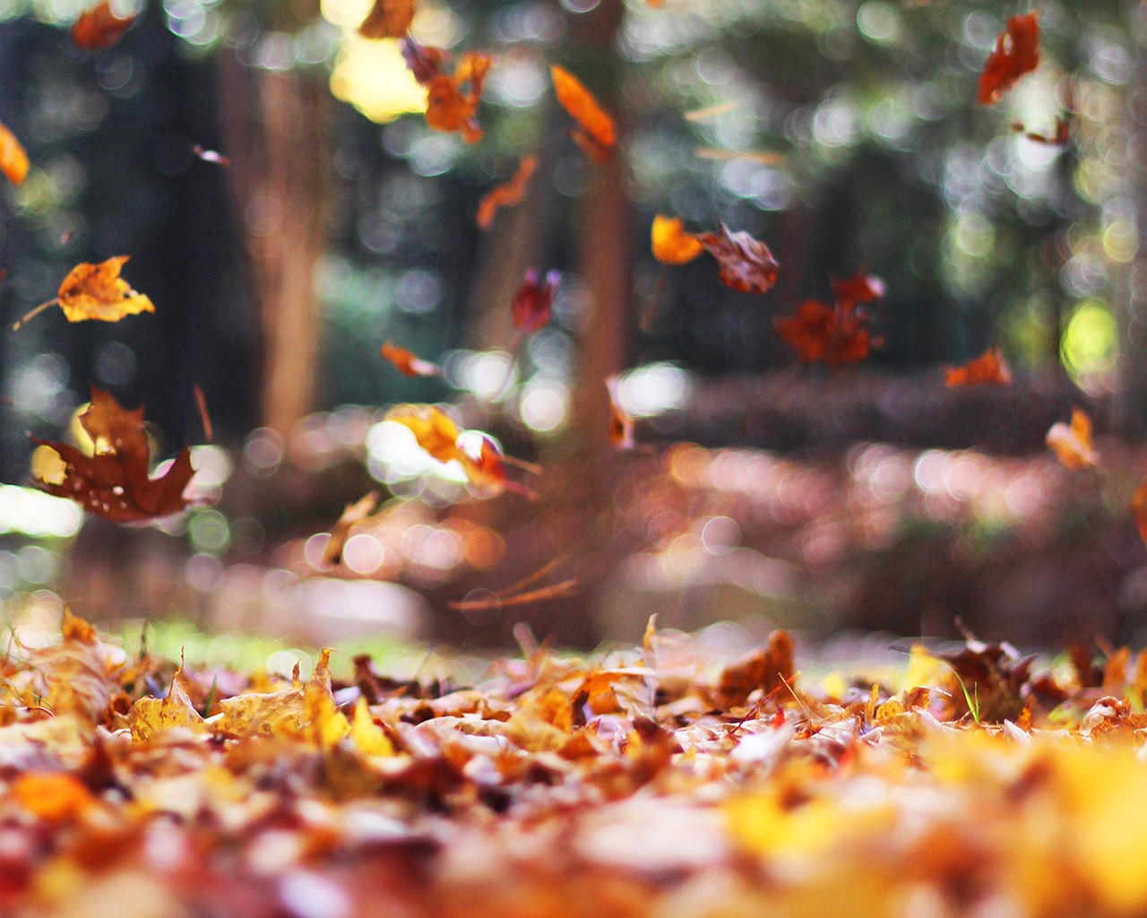 wallpaper for desktop, laptop | mw77-fall-leaves-nature ...