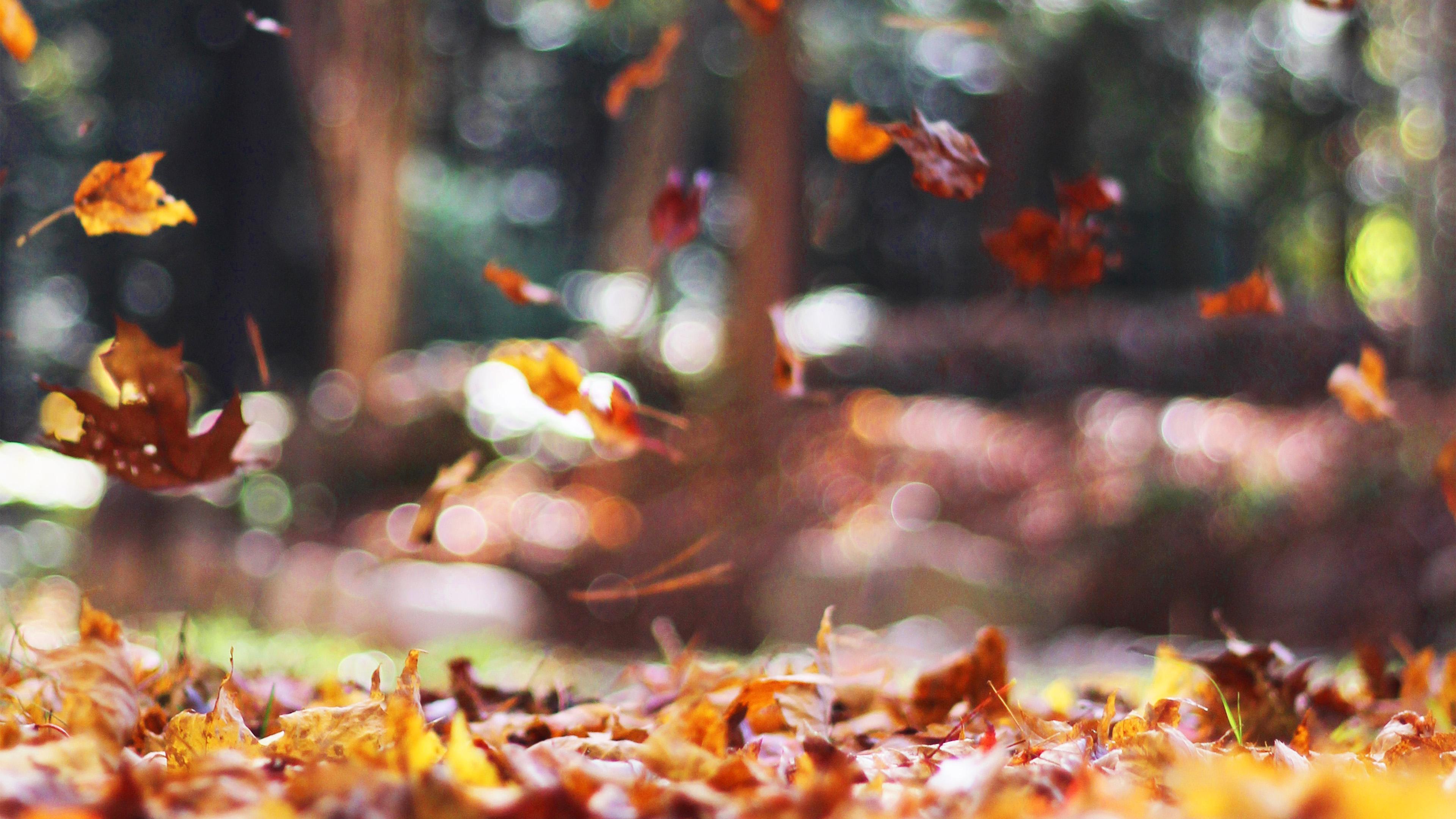 wallpaper for desktop, laptop | mw77-fall-leaves-nature ...
