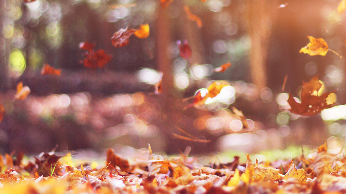 Mw78 Fall Leaves Nature Tree Year Sad Flare Wallpaper