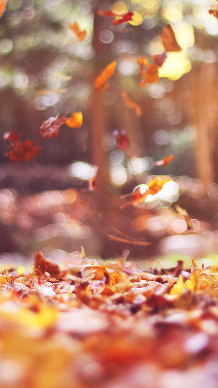 iPhone6papers.co-Apple-iPhone-6-iphone6-plus-wallpaper-mw78-fall-leaves-nature-tree-year-sad-flare