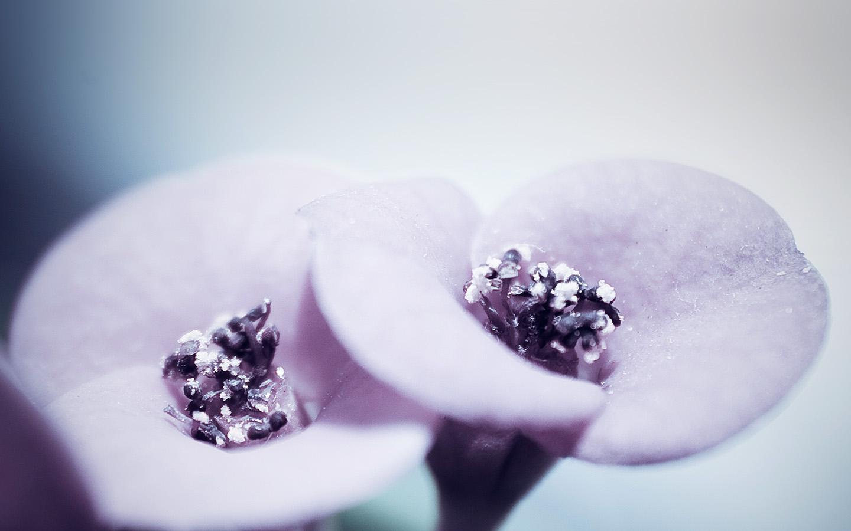 Macbook air 11 mw87 flower blue purple beautiful rain nature