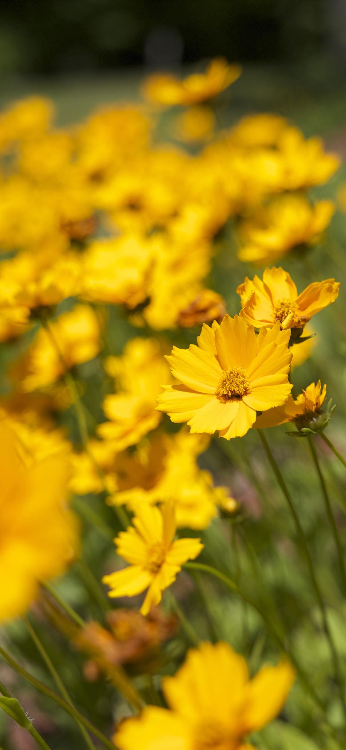 iPhoneXpapers.com-Apple-iPhone-wallpaper-mw99-flower-yellow-zoom-bokeh-summer-delight