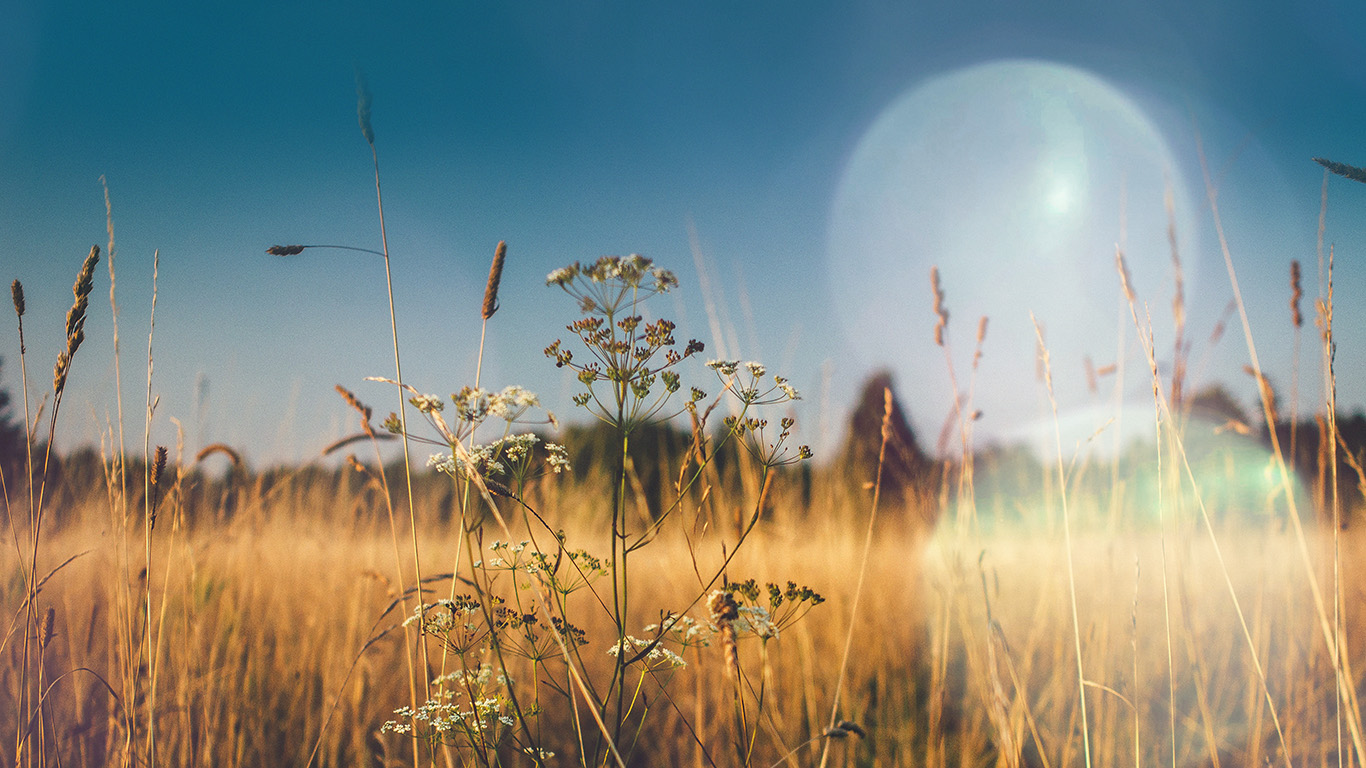 desktop-wallpaper-laptop-mac-macbook-air-mx04-fall-field-nature-flower-reed-sunny-flare-wallpaper