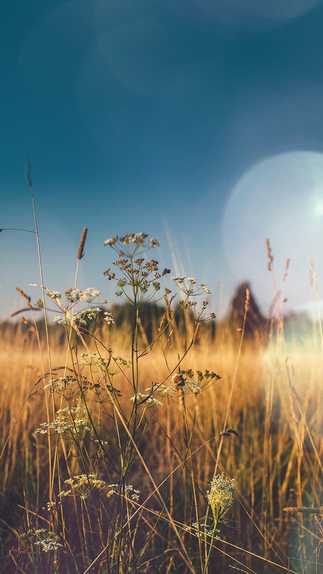freeios8.com-iphone-4-5-6-plus-ipad-ios8-mx04-fall-field-nature-flower-reed-sunny-flare