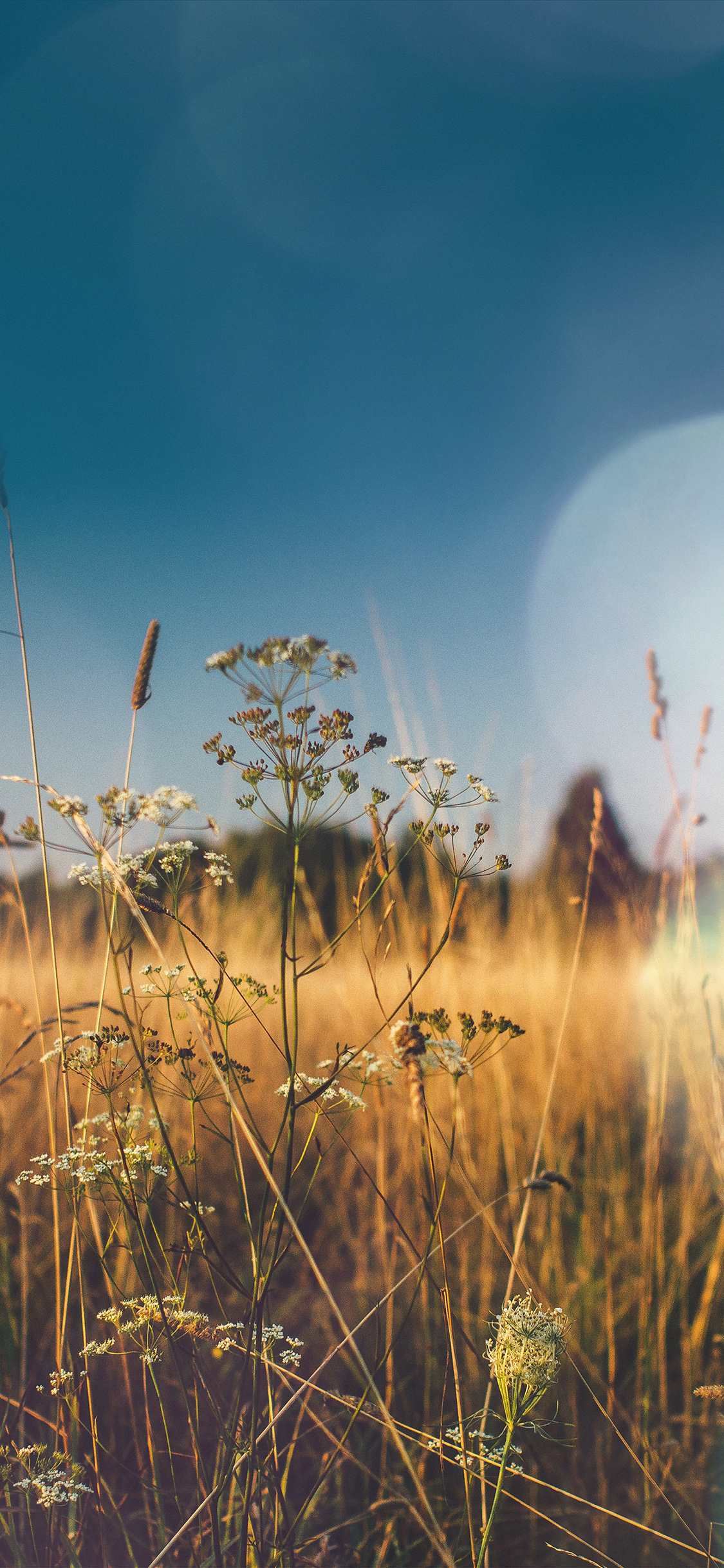 iPhoneXpapers.com-Apple-iPhone-wallpaper-mx04-fall-field-nature-flower-reed-sunny-flare
