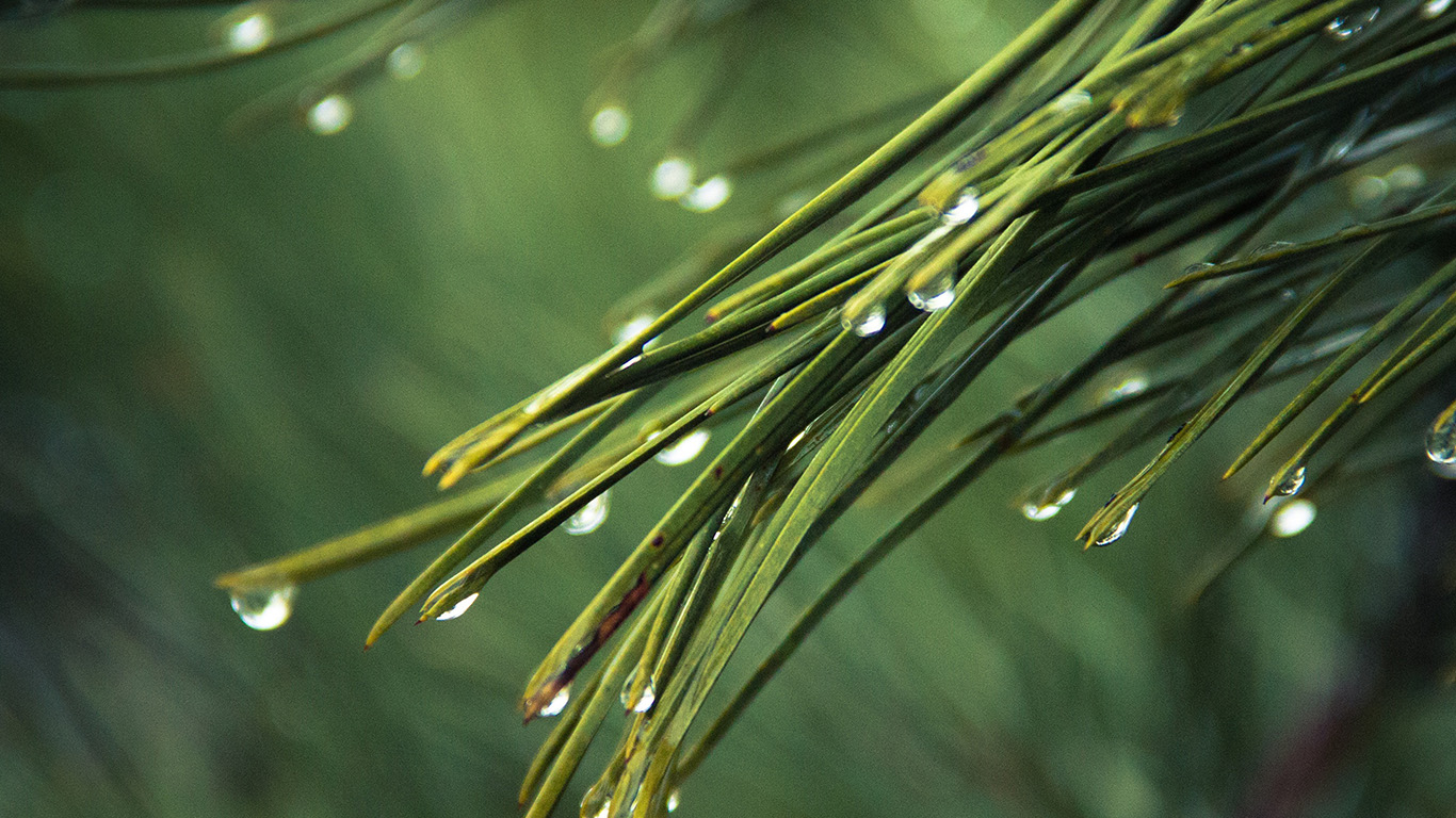desktop-wallpaper-laptop-mac-macbook-airmx05-rain-pine-tree-green-nature-mountain-wallpaper