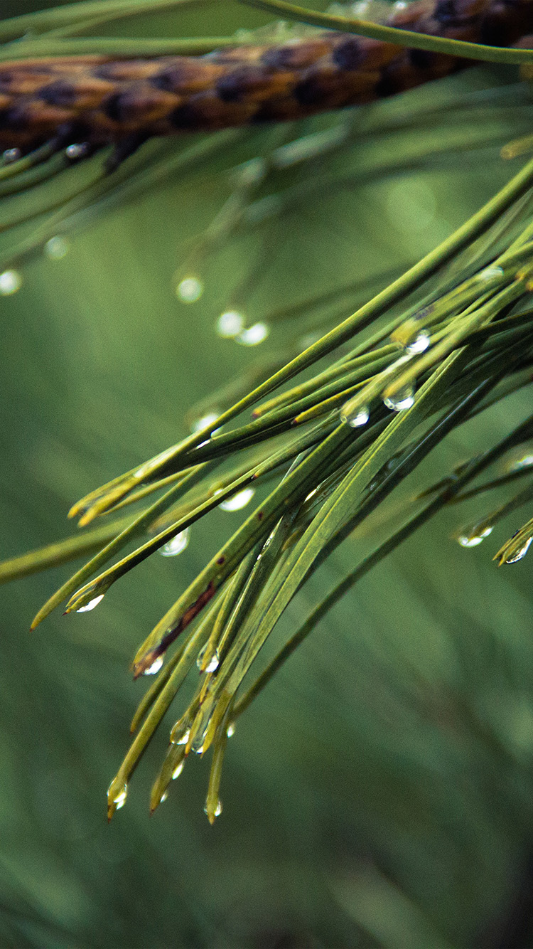 iPhonepapers.com-Apple-iPhone8-wallpaper-mx05-rain-pine-tree-green-nature-mountain