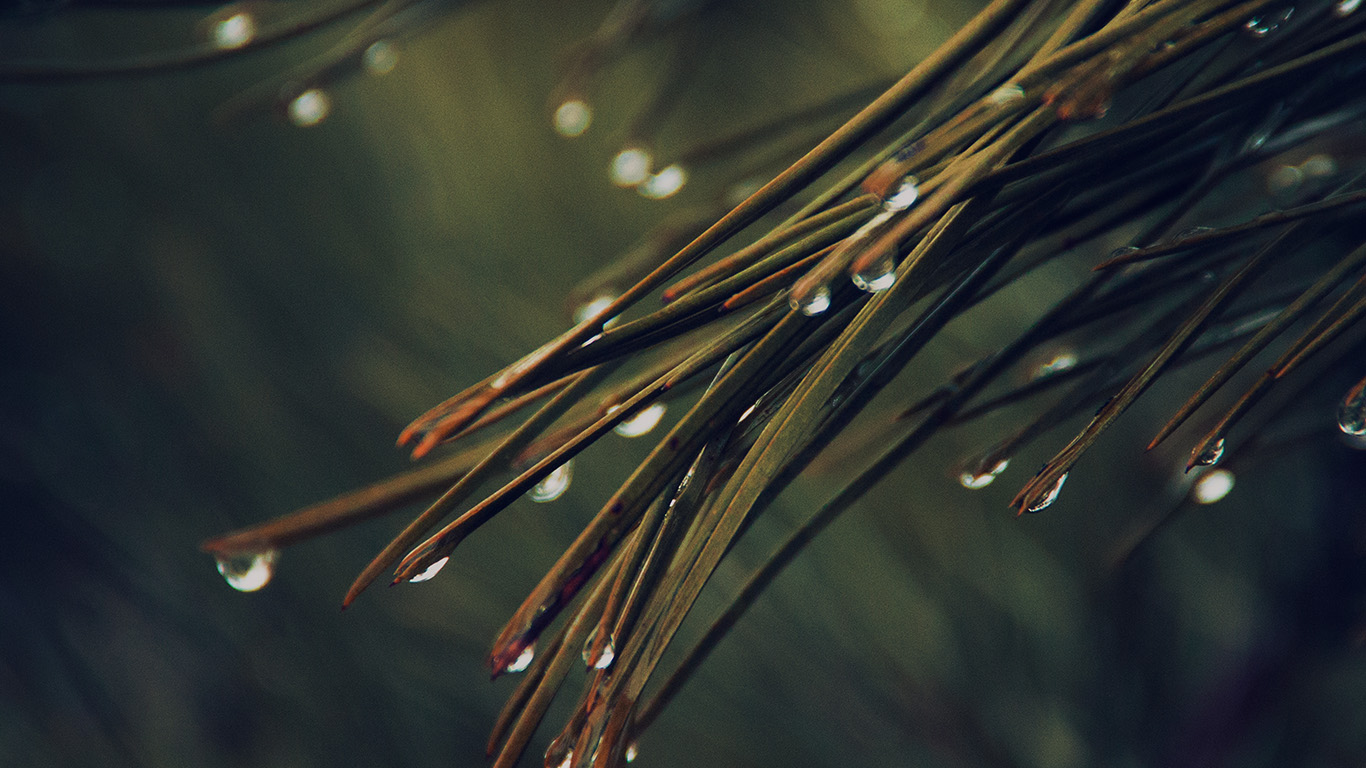 desktop-wallpaper-laptop-mac-macbook-air-mx06-rain-pine-tree-dark-green-nature-mountain-wallpaper