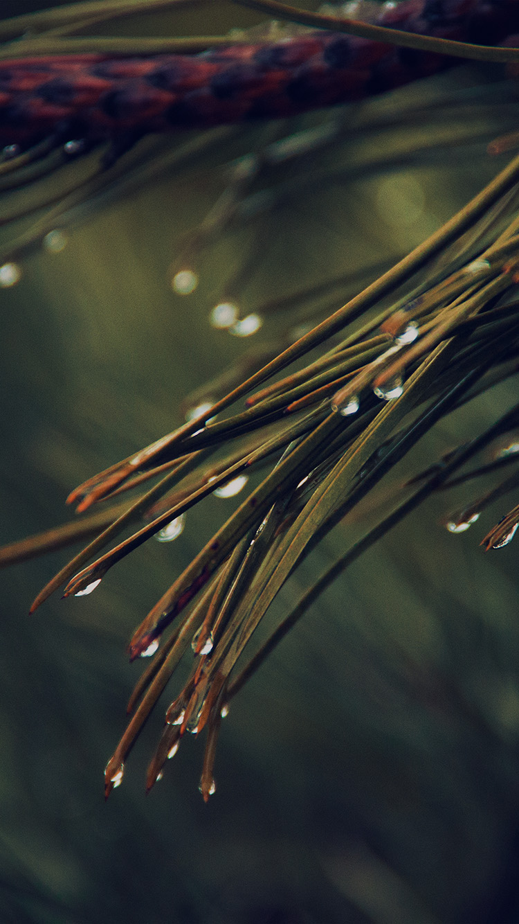iPhone7papers.com-Apple-iPhone7-iphone7plus-wallpaper-mx06-rain-pine-tree-dark-green-nature-mountain