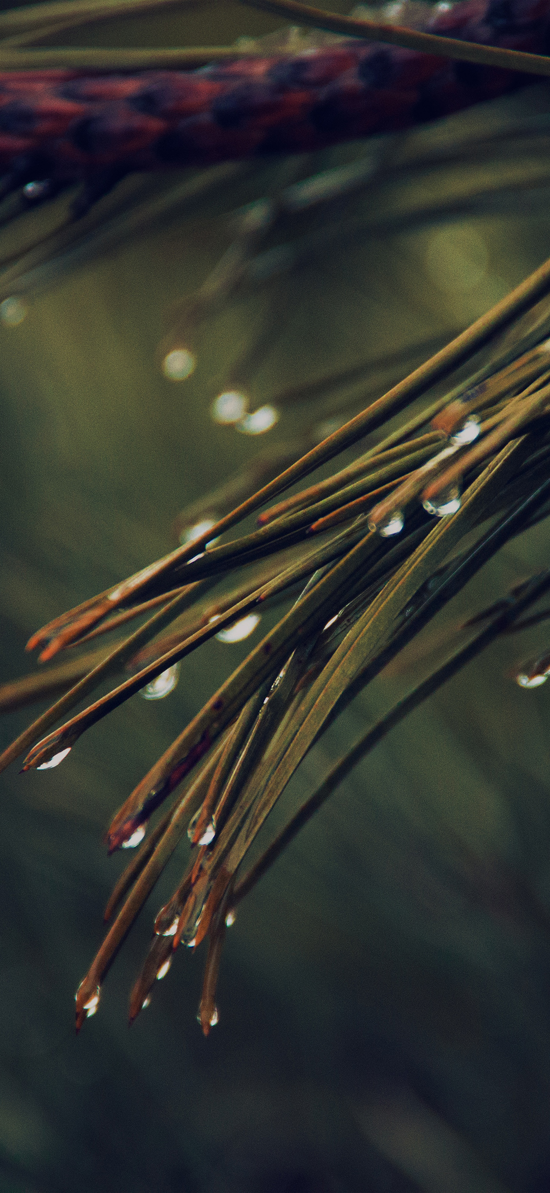 iPhoneXpapers.com-Apple-iPhone-wallpaper-mx06-rain-pine-tree-dark-green-nature-mountain
