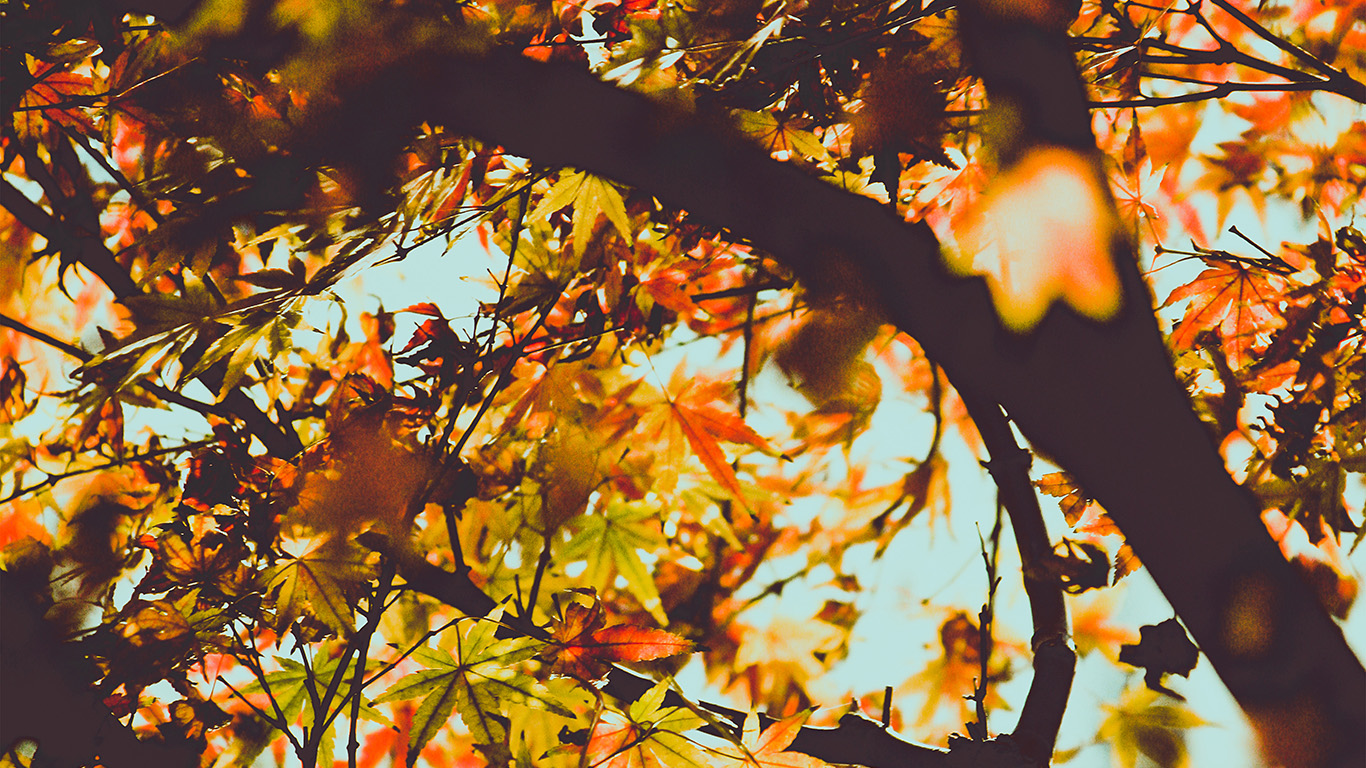desktop-wallpaper-laptop-mac-macbook-airmx12-fall-tree-leaf-autumn-nature-mountain-wallpaper