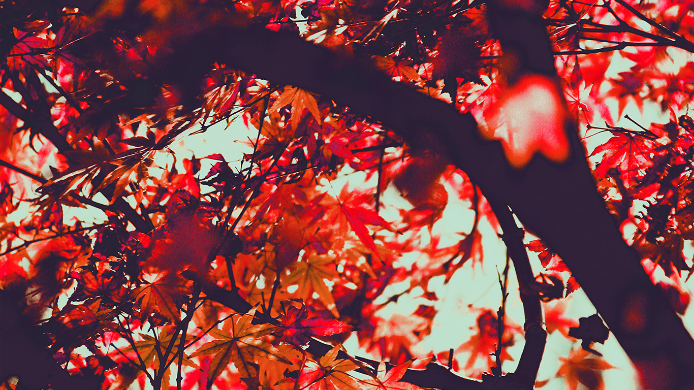 desktop-wallpaper-laptop-mac-macbook-air-mx13-fall-tree-leaf-autumn-nature-mountain-red-wallpaper