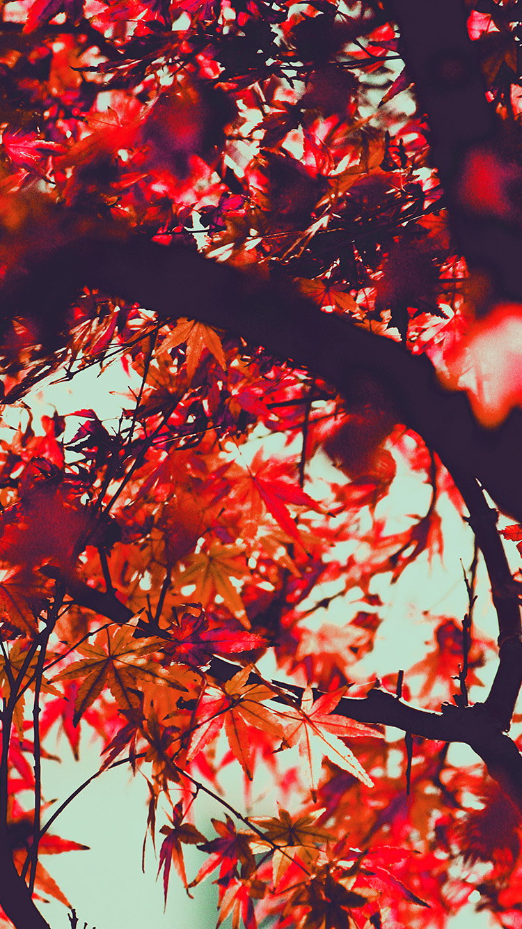 iPhone6papers.co-Apple-iPhone-6-iphone6-plus-wallpaper-mx13-fall-tree-leaf-autumn-nature-mountain-red