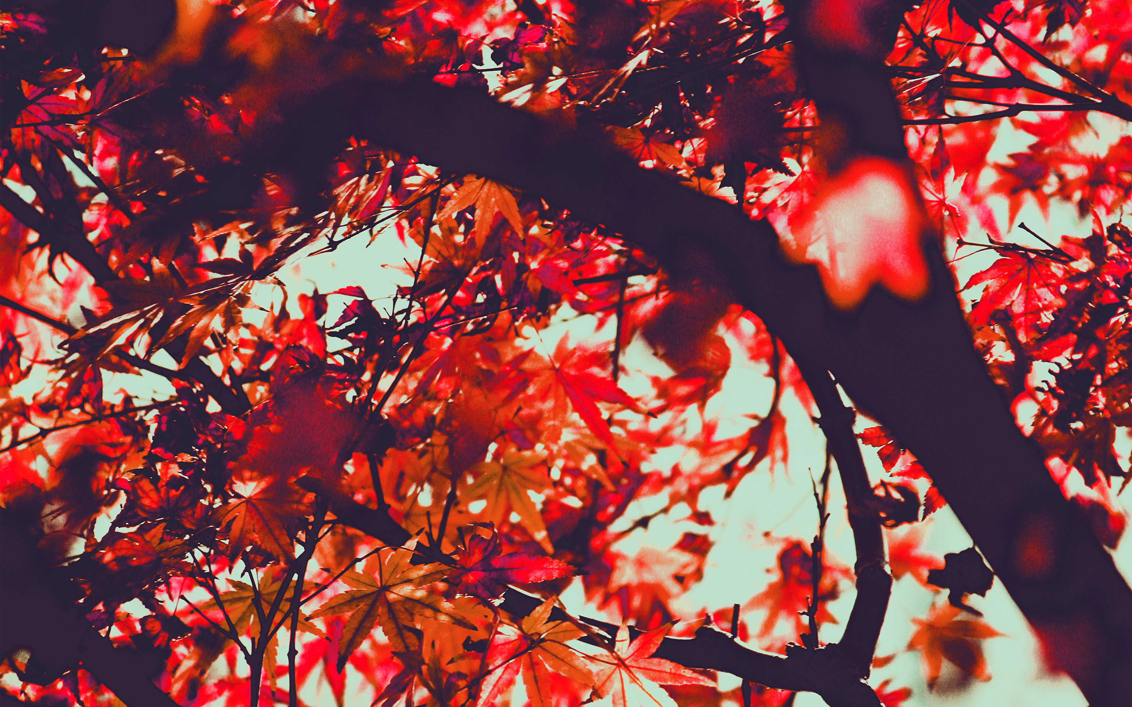 Mx13 Fall Tree Leaf Autumn Nature Mountain Red Wallpaper