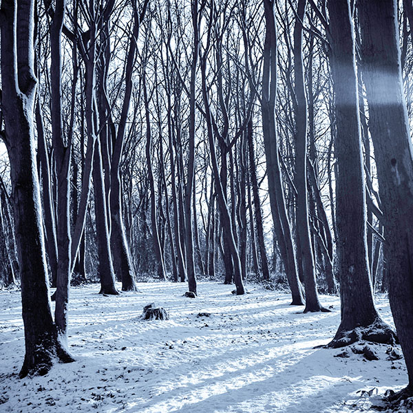 iPapers.co-Apple-iPhone-iPad-Macbook-iMac-wallpaper-mx19-cold-winter-forest-snow-nature-mountain-wallpaper