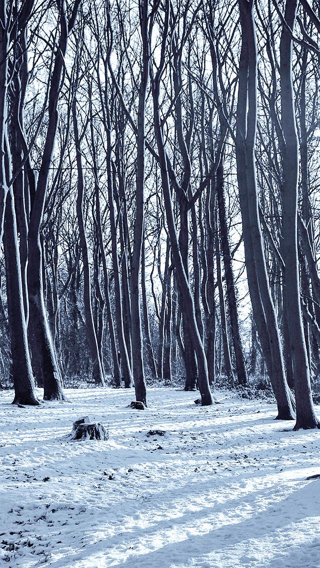 Winter Trees Mountains