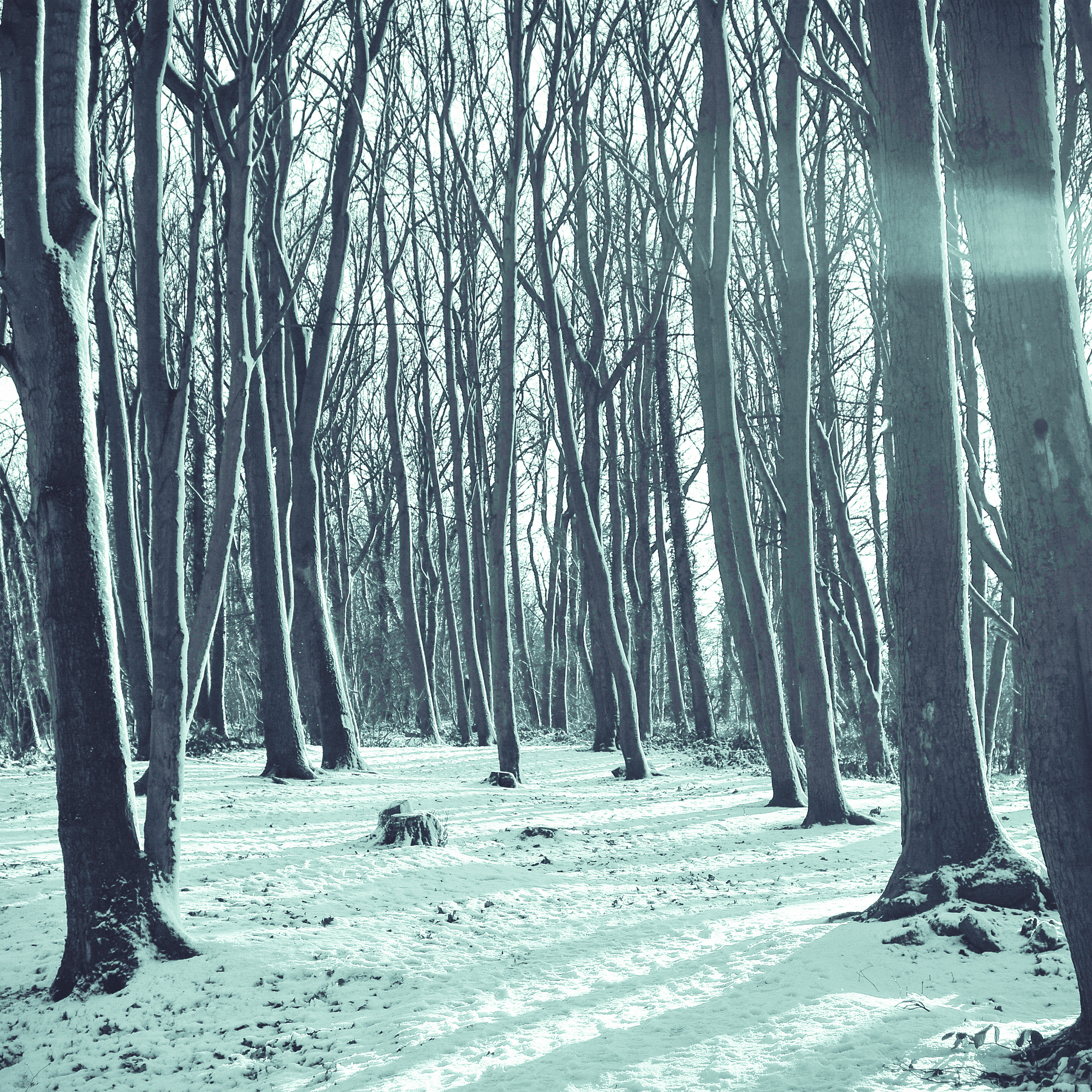 I Love Papers | mx20-cold-winter-forest-snow-nature ...