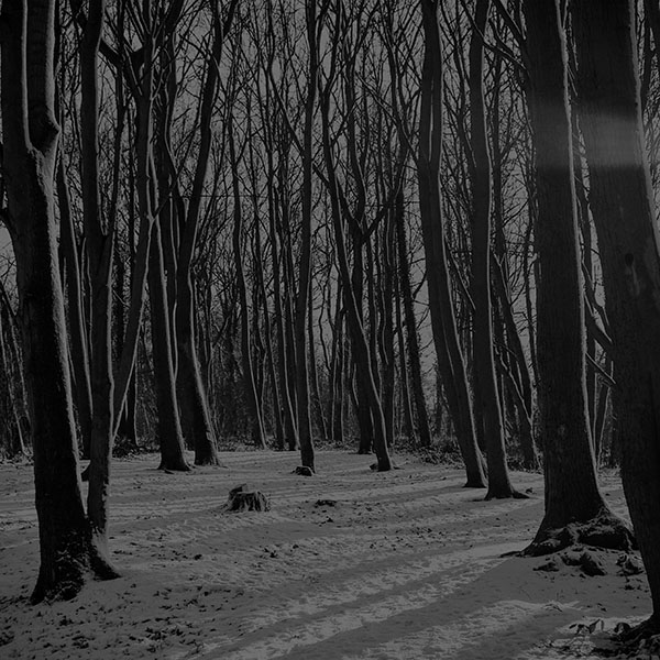 iPapers.co-Apple-iPhone-iPad-Macbook-iMac-wallpaper-mx21-cold-winter-forest-snow-nature-mountain-dark-bw-wallpaper