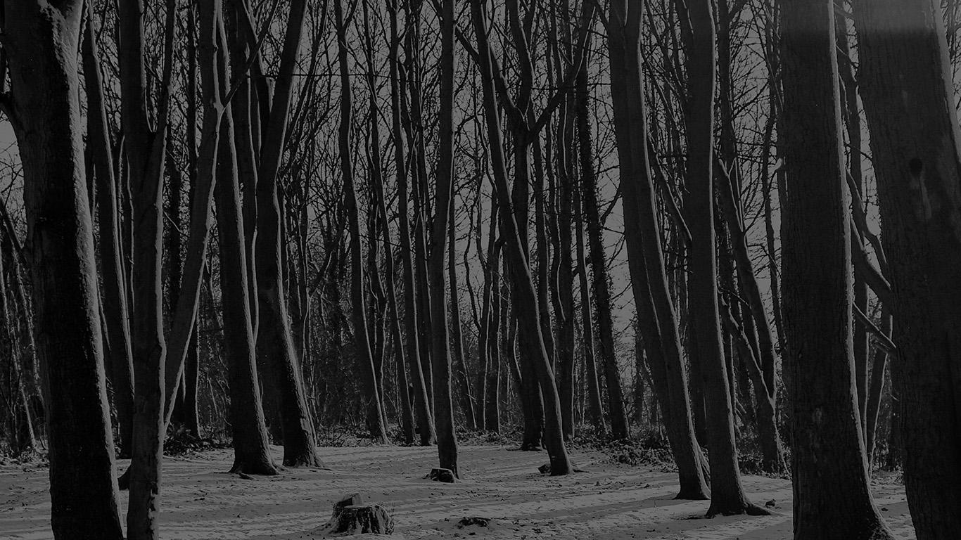 desktop-wallpaper-laptop-mac-macbook-air-mx21-cold-winter-forest-snow-nature-mountain-dark-bw-wallpaper