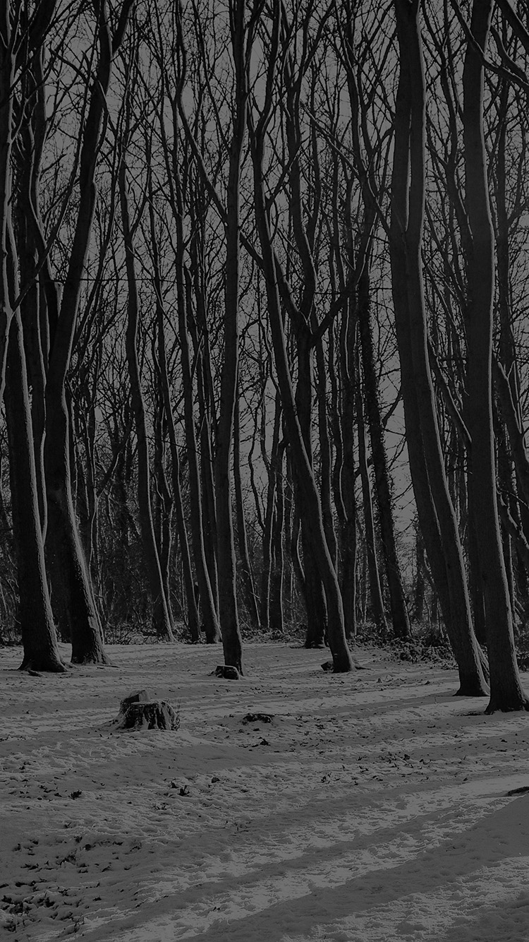 Papers.co-iPhone5-iphone6-plus-wallpaper-mx21-cold-winter-forest-snow-nature-mountain-dark-bw